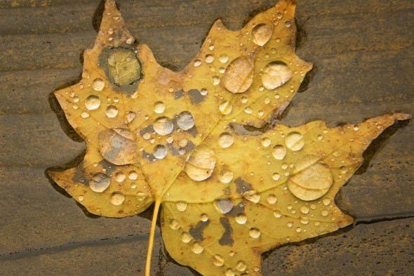 RAIN ON A FALLEN LEAF IN OLD FORGE, NY PHOTOGRAPHED BY TODD SPOTH