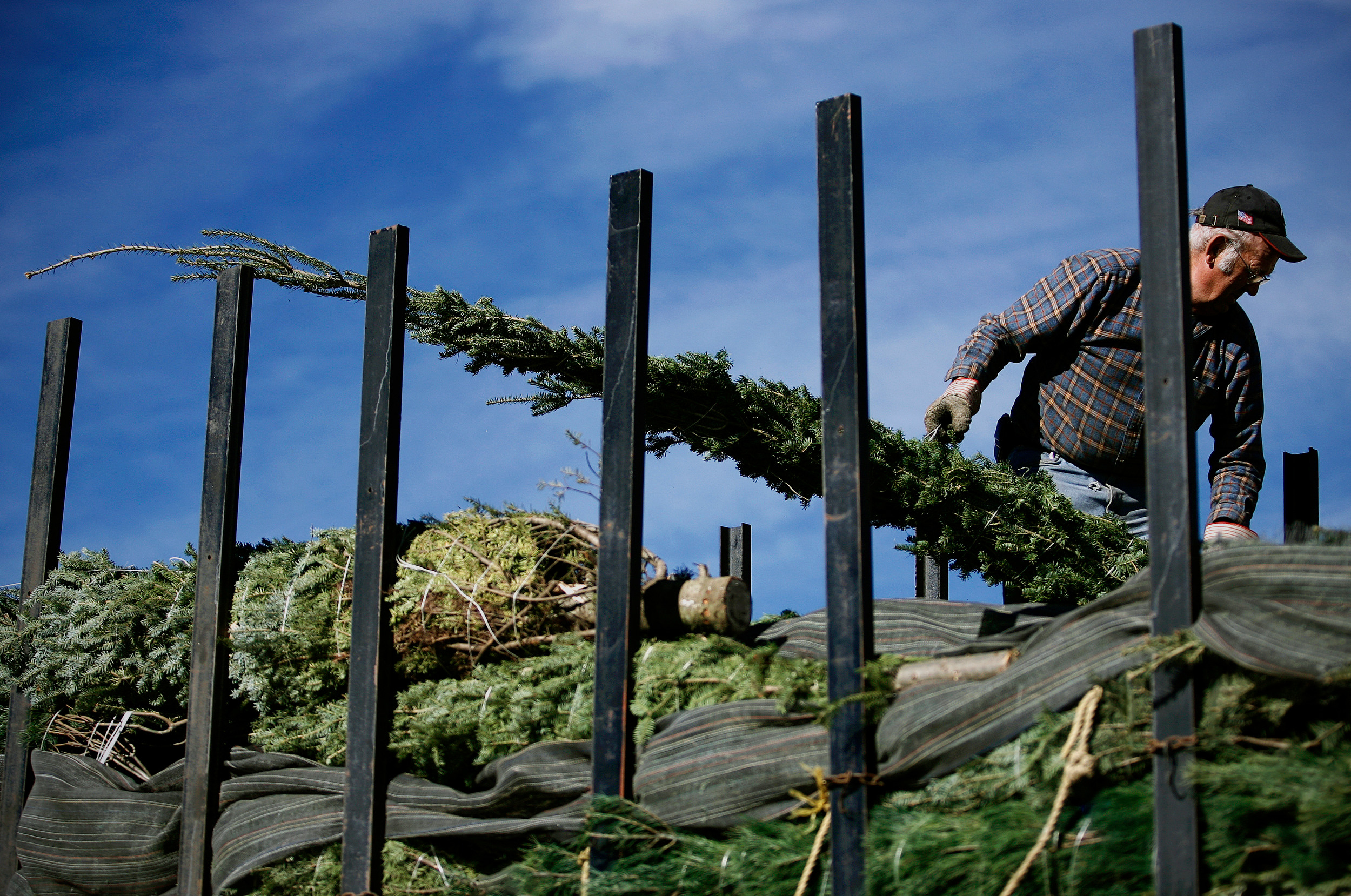 CHRISTMAS TREE FARMER © TODD SPOTH